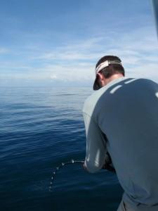 gulf-fishing 8003317353 o